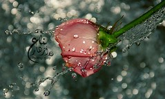 Splash photo by Zizi Ali