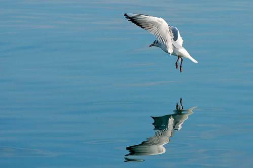 Landing - Atterrissage