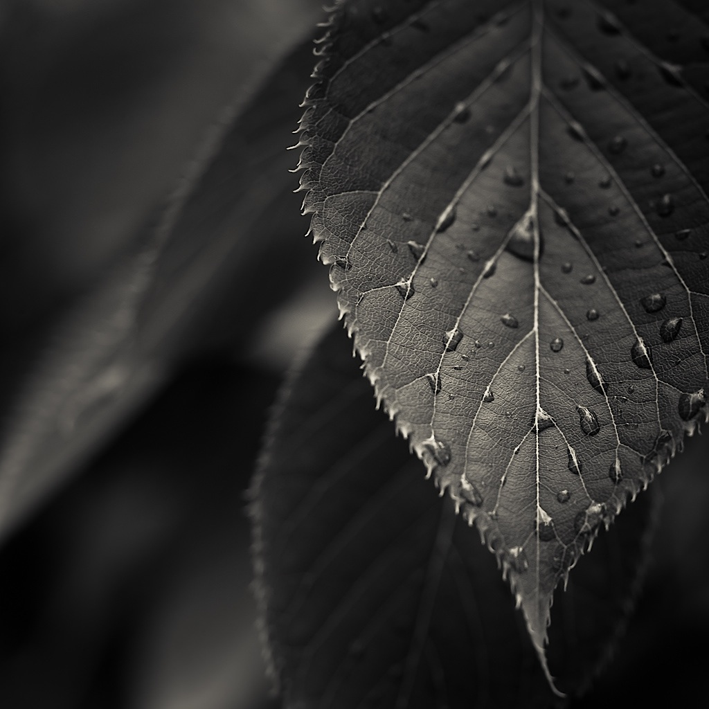 Black and white photo by ►CubaGallery