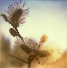 Fuzzy photo by Blitzwuerfel (flash cube)
