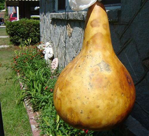 drying gourd