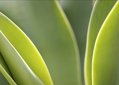 Succulent Leaves Close Up
