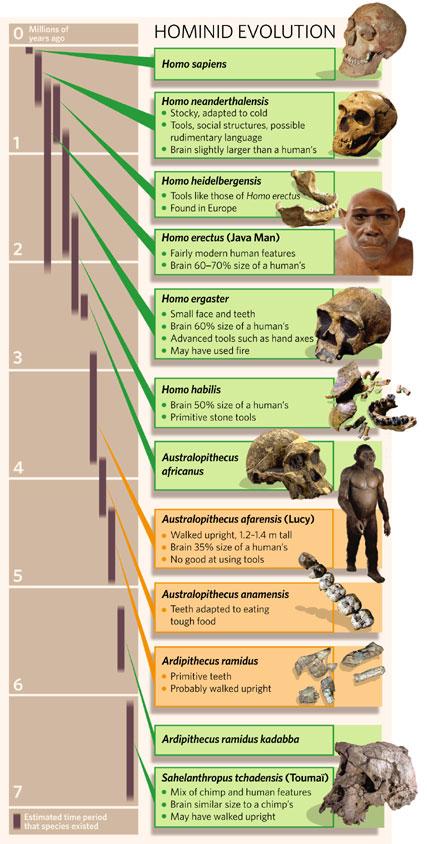 hominidtimeline