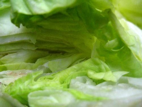 Intimate lettuce 3