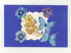 blue buttefly