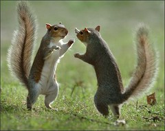 450day_squirrels