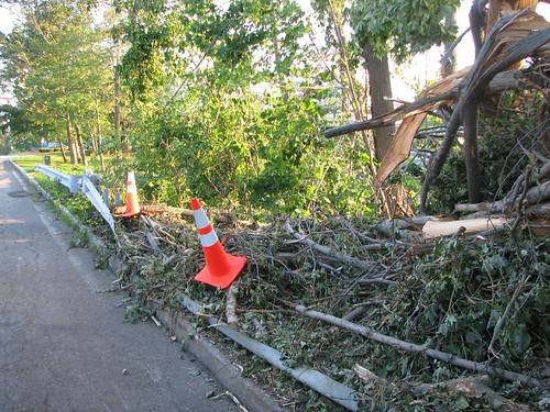 downed trees & bent guardrail
