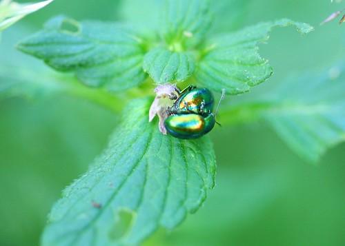 unbekannte Käfer