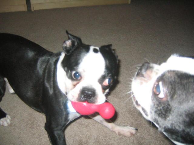deranged terriers