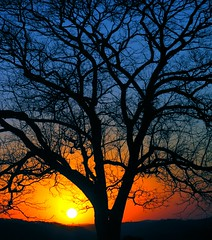 another sunset, another tree photo by joaobambu