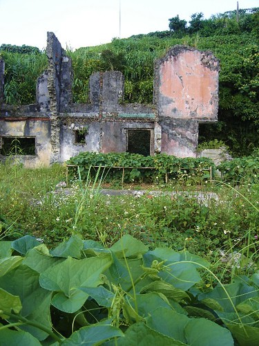 vines and ruins
