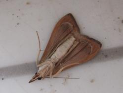 moth under
