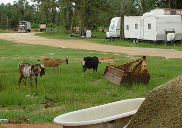 missi-goats