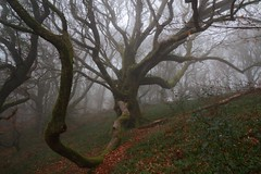 Creepy tree in the fog ;) photo by crowlem