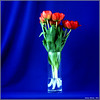 13912034097_2d1aeec922_t