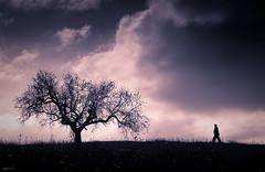 El hombre y el almendro photo by Angel Valencia