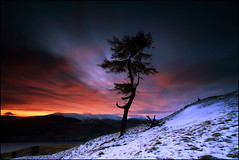 Larch Tree Dawn Loch Tay photo by angus clyne