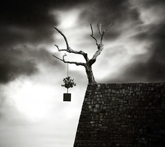 Tree photo by George Christakis