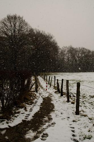 Snowing....