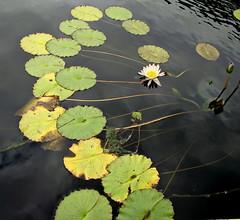 """""""Floating Path""""  DSC01340-1 photo by kluehirschSnowpine"""