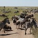 Serengeti og Ngorongoro