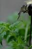 7318665416_1ae668ceae_t