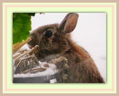 Easter Bunny photo by bigbrowneyez