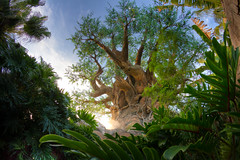 Animal Kingdom - See the Forest photo by SpreadTheMagic