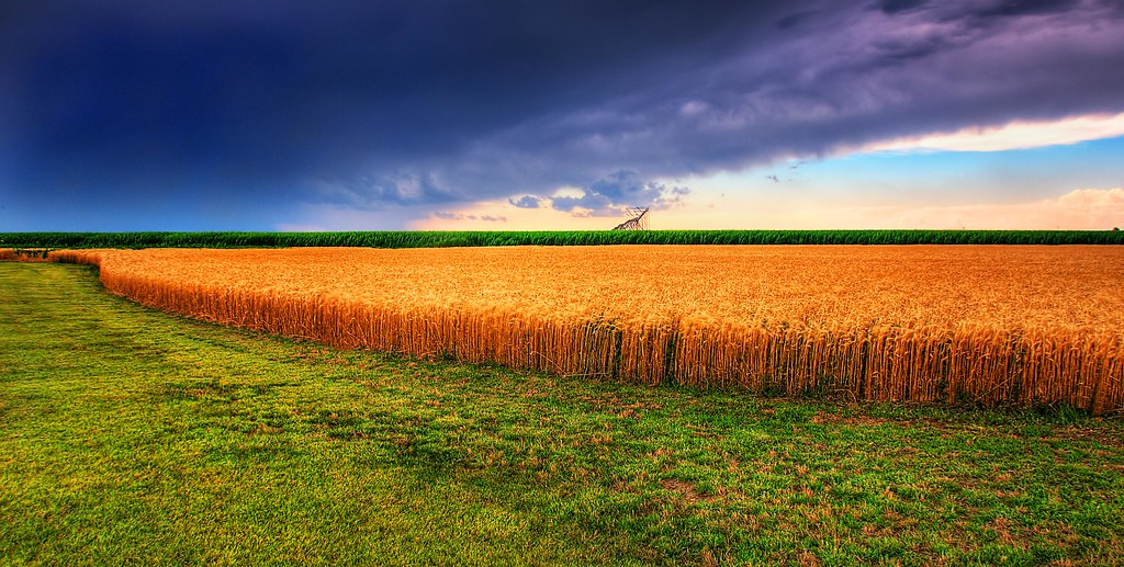 Kansas Summer Wheat and Storm Panorama photo by JamesWatkins