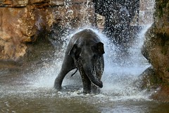 BABY ELEPHANT AT CHESTER ZOO photo by jill lamb 53 camping in the Forest of Dean catch u