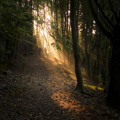 Autumn Fantasy : In the cone of light photo by Gilderic Photography