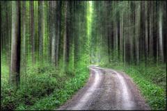 Schwarzwald photo by ∃Scape