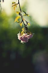 Like a princess photo by Mathijs Delva