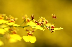 """Yellow-colored objects appear to be gold"" photo by ...Sathiya"