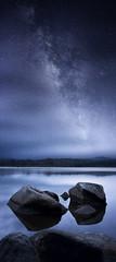 Blue Straggler photo by Tim Poulton