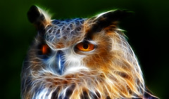 Owl in Fractalius photo by photosbyflick