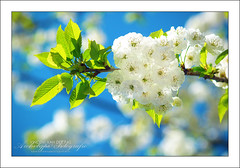 Bright Blossom photo by Vincent_AF