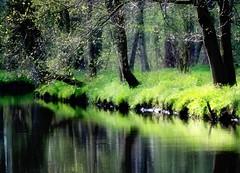 Green photo by Torsten Reuschling