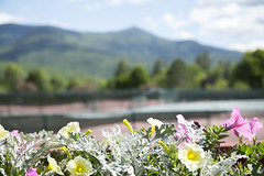 Tennis Backdrop