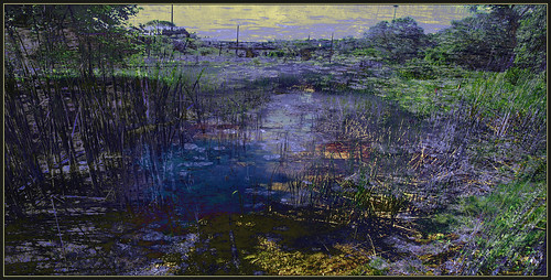 Wetlands: Dark Stream Impression photo by Tim Noonan