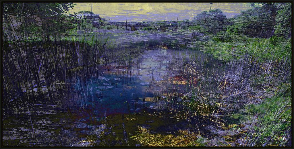 Wetlands: Dark Stream Impression photo by Tim Noonan