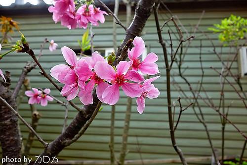 36_台北士林社子台北花卉村