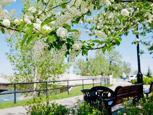 Calgary Prince's Island Park