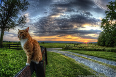 Sunset Cat photo by Tom Lussier Photography