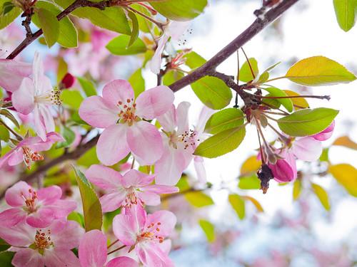 Spring in Calgary