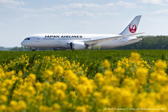 Japan airlines 787 with flowers photo by Vasily Kuznetsov