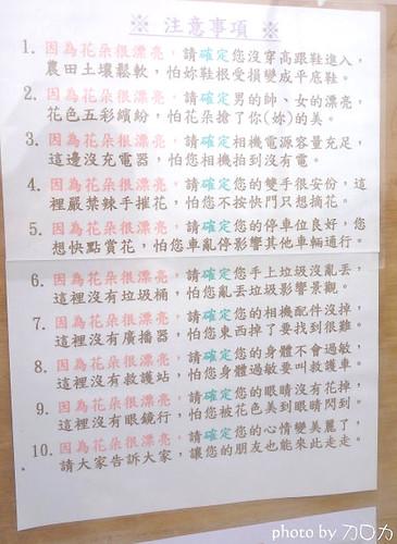 34_台南學甲蜀葵花海
