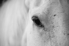Arabian Eye (Explored) photo by siraf72