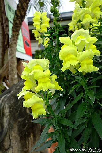32_台北士林社子台北花卉村