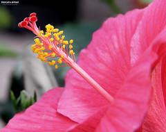 مهرجان ربيع الزهور الثالث عشر بالدمام photo by Mustafa Ahmad